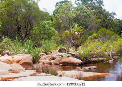 Forest plants near the tranquil Walsh River in Queensland, Australia