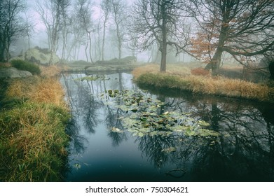 Forest pond in fog