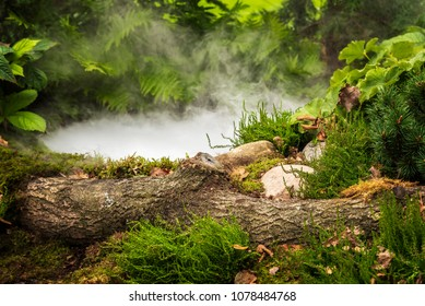 Forest pond with mysterious smoke or fog.