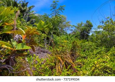 Forest of Praslin island