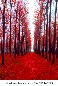 Forest in red color Nepal