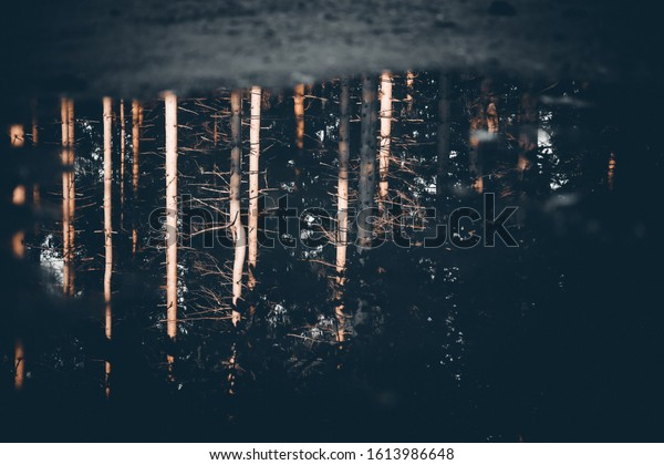 Forest reflected in a puddle with water