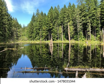 Forest reflecting of the lake. Redmond watershed preserve