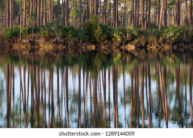 Forest reflections along the banks of the  Long Pine Key Lake in Everglades National Park near Homestead, Florida