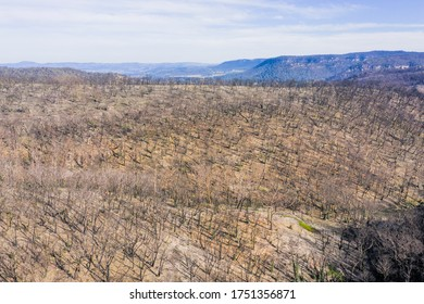Forest regeneration in The Blue Mountains after the severe bushfires