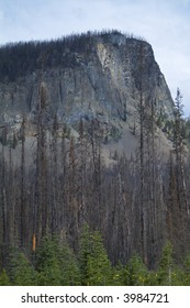 Forest regrows after devastating forest fire in the Rocky Mountains