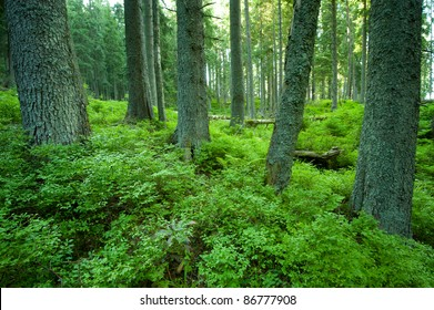 forest reserves
