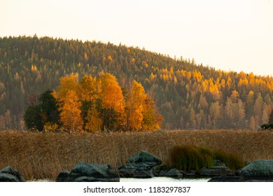 Forest ridge with autumn colors at sunset time