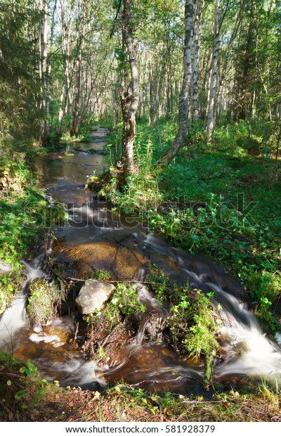 Forest River with drinking water on the Big Solovetsky Island
