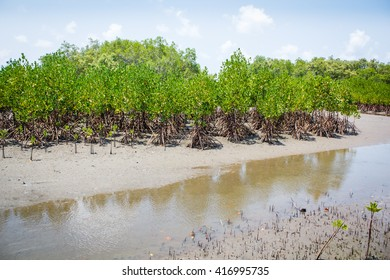 Forest at the river estuary or Mangroves forest.