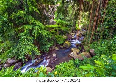 Forest river, with hanging lianas on the background of the courtyard of the temple and funerary complex in Tampaksiring. Gunung Kawi Temple, Bali, Indonesia.