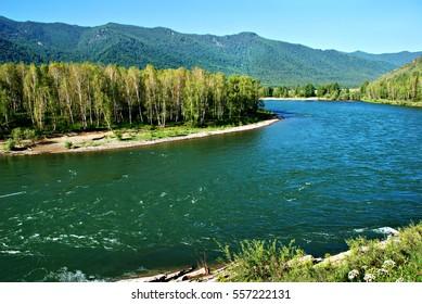 Forest river Kucherla, Altai, Russia, wild landscape