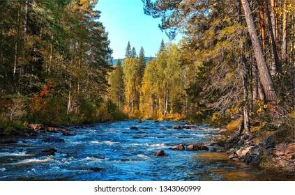 Forest river landscape. Autumn forest river scene. Forest river water view. Forest river flowing landscape