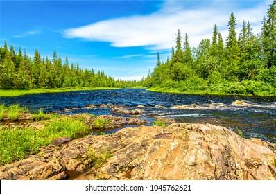 Wald-Flussbäume Sommerpanorama-Landschaft