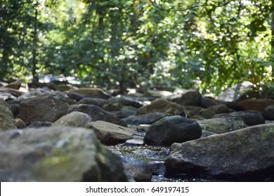 forest river landscape with rocks