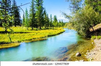 Forest river landscape. River forest view. Forest river summer scene. Forest river water