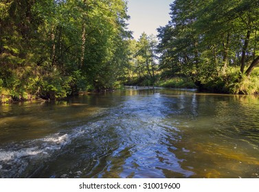 Forest river in the morning at dawn, forest, nature. fauna