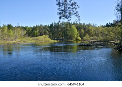 The forest river in the national park of Russia is springtime. Water spring landscape with trees.
