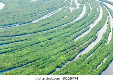 Forest river in spring, top view