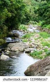Forest river stone landscape