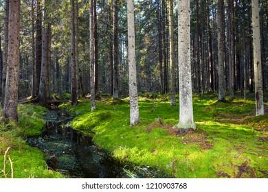 Forest river stream green moss landscape. Autumn moss forest river stream in Karelia woods. Mossy forest river stream view. Autumn forest river stream scene