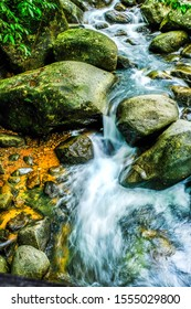 Forest river stream water with rock.
