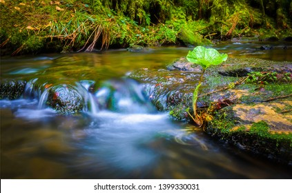 Forest river stream water slowly flow. Mossy river stream rocks. Mossy forest river stream view. Forrest river stream flow