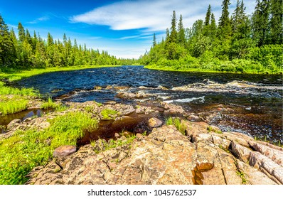 Forest river summer landscape. River water view