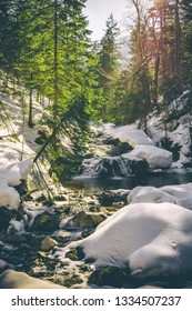 Forest and river in the Tatras National Park, Zakopane, Poland.
