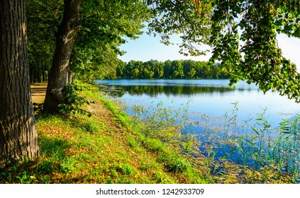 Forest river trees view. Forest river shore scene. Green forest river shore. Forest river trees scene