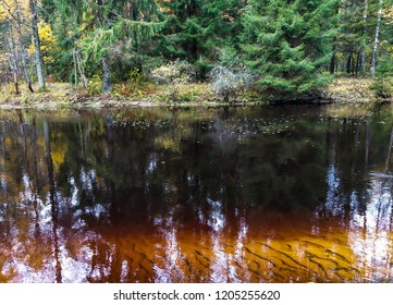 Forest river water in autumn. Forest river dark water view. Autumn forest river dark water landscape. Forest river iin autumn season