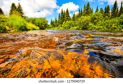 Forest river water flow scene. River water in forest scene. Forest river water close up. Forest river water view