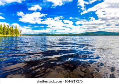 Forest river water landscape