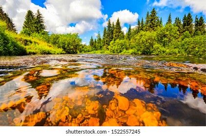 Forest river water surface view. Forest river water reflection. River water surface. River water in forest