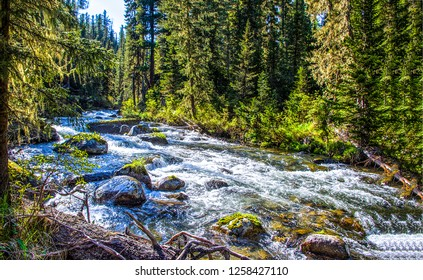 Forest river waterfall landscape. Forest wild river view. River forest water flow. Forest river water flowing