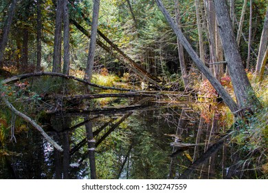 Forest River Wetlands. Hardwoods forest reflected in wetland river ecosystem in Hartwick Pines of Michigan.