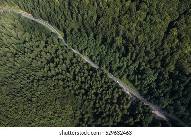 Forest road from above