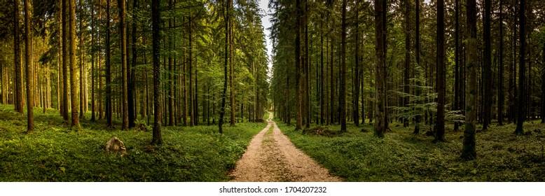 Forest road in the Alps, near Salzburg, near Fürstenbrunn at Untersberg