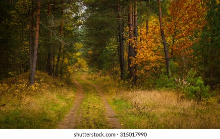 forest road in the autumn