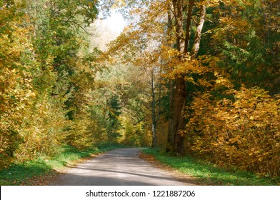 forest road in autumn leaves, autumn landscape, forest trail, rominten forest