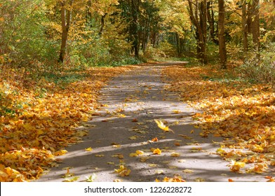 forest road in autumn leaves, yellowed trees by the road