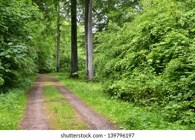 Forest road in a beech wood in Denmark