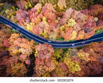 Forest road with cars. Autumn colours. Aerial view from a drone. Transylvania, Romania.