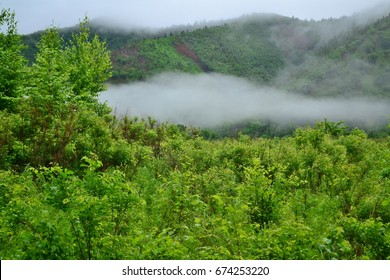 Forest, road, clouds. River Milogradovka. Primorye. Russia. July 4, 2011.