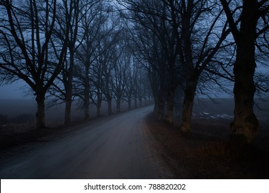 Forest road in the dark