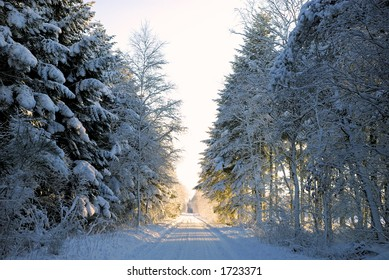 Forest road with a deep layer of snow. Jutland, Denmark, Scandinavia.