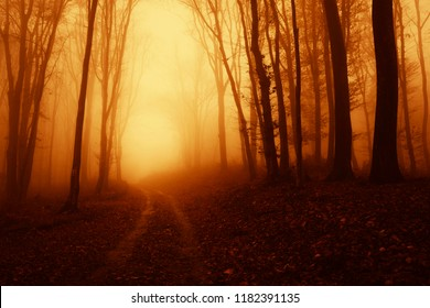 forest road in fog on magical autumn morning