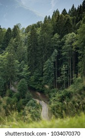 Forest road goes into mountain pines in the Bavarian Alps, Germany