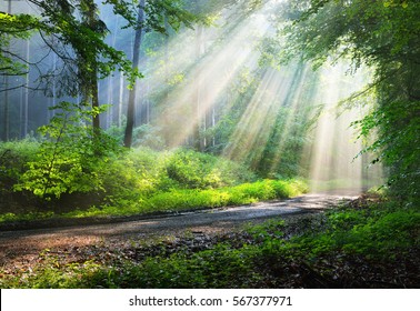 Forest road in a green foggy forest with sun rays in background. Osnabruck, Germany