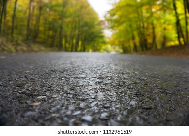 forest road from ground level